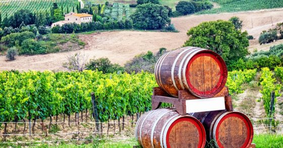 Wine Day Tour in Tuscany, Chianti Region, with Lunch