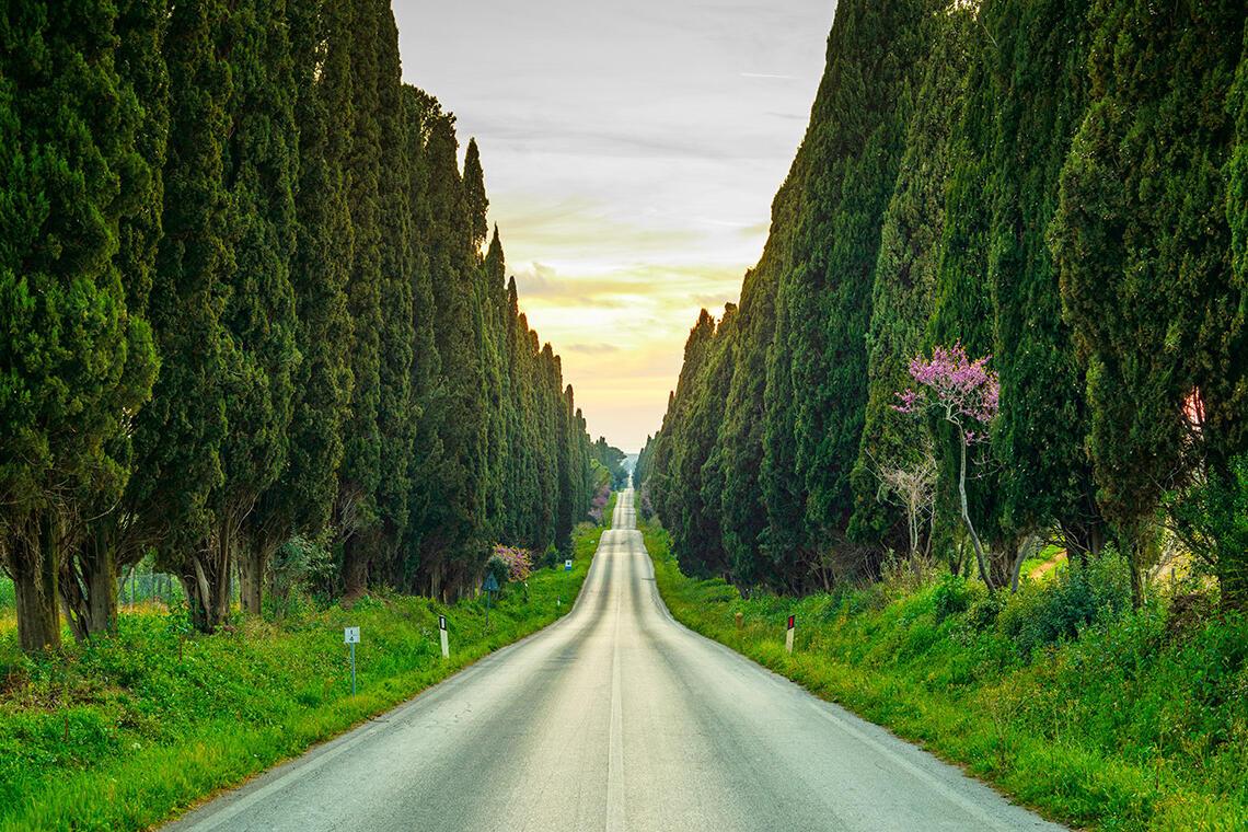 Bolgheri Cypresses Avenue Tuscany