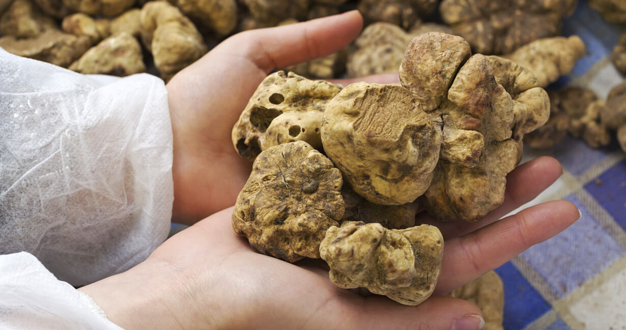 White Truffle Tour in Tuscany