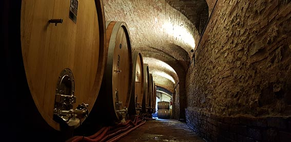 wine cellar in the chianti wine tour shore excursion from Livorno