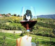 chianti and supertuscan tour