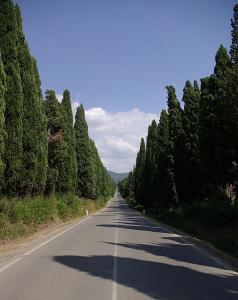 cypress-road-bolgheri
