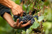 best wine tour in the chianti area