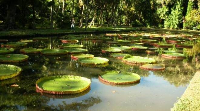 Orto Botanico Lucca
