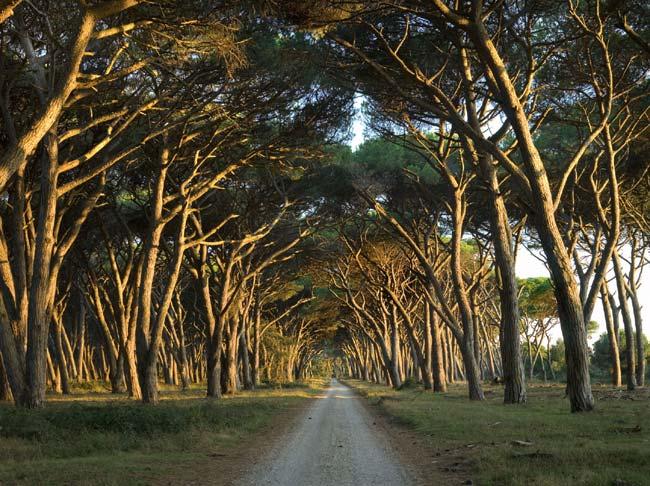 San Rossore Park
